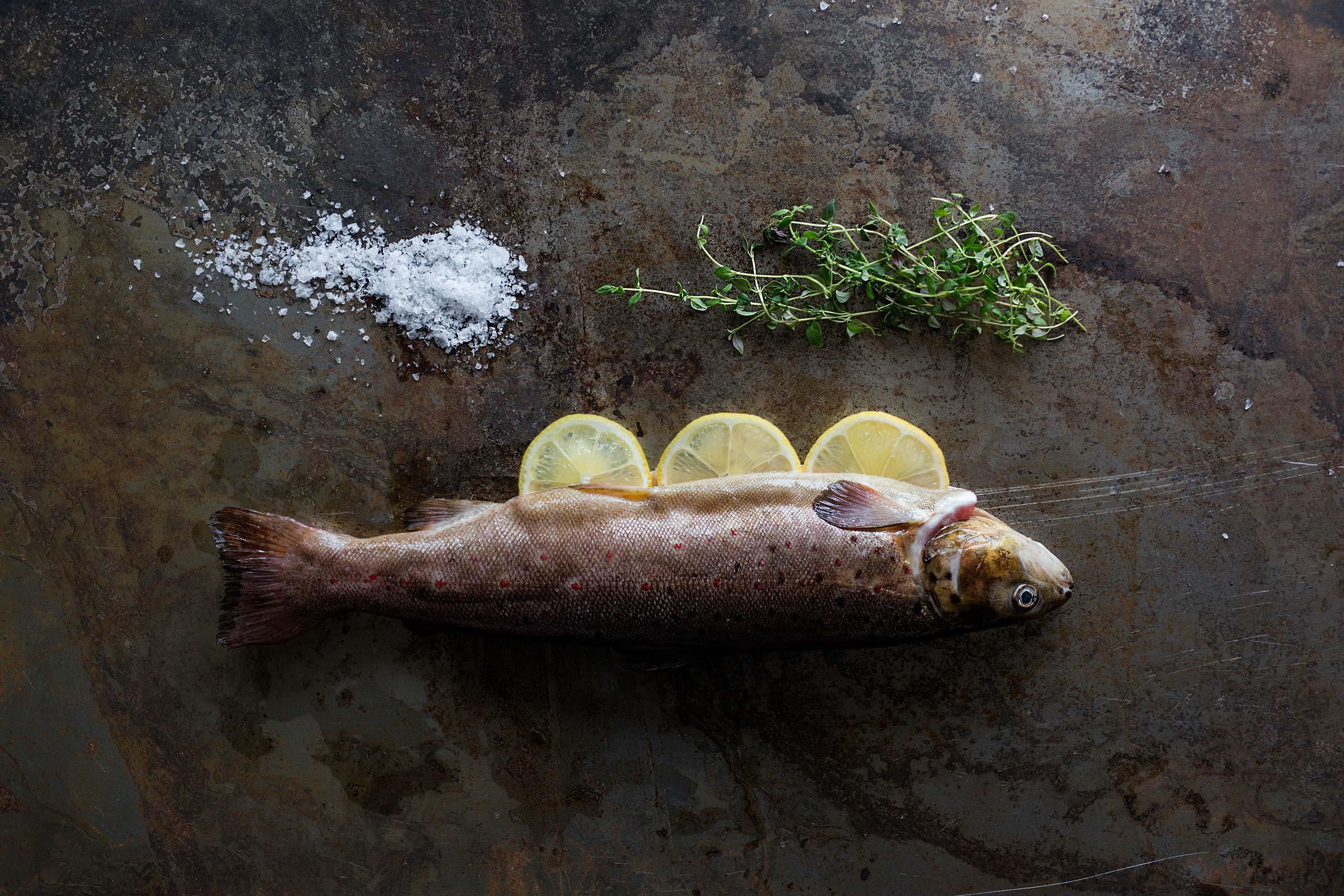 Bilde av en fisk