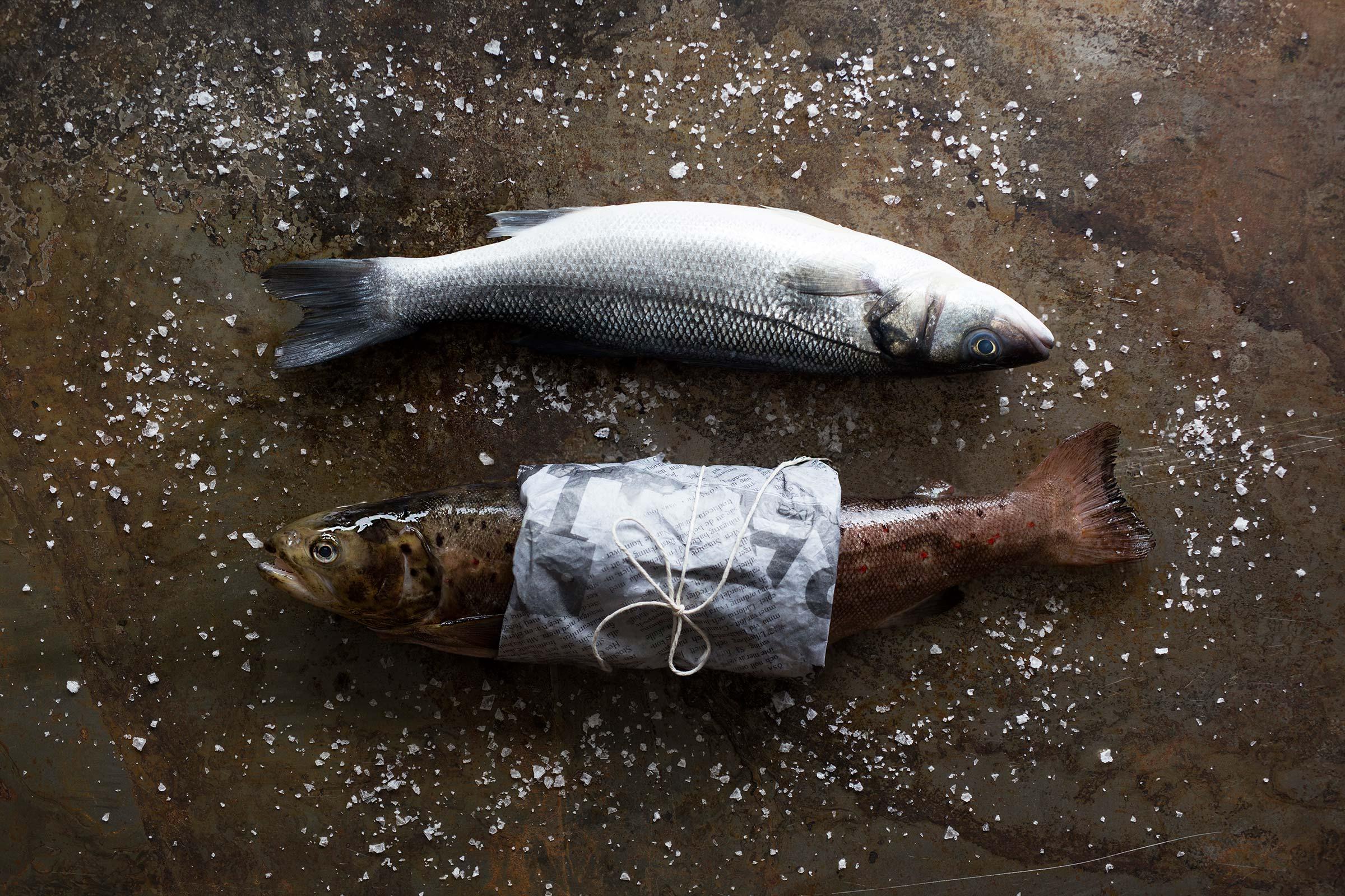 Bilde av to fisk
