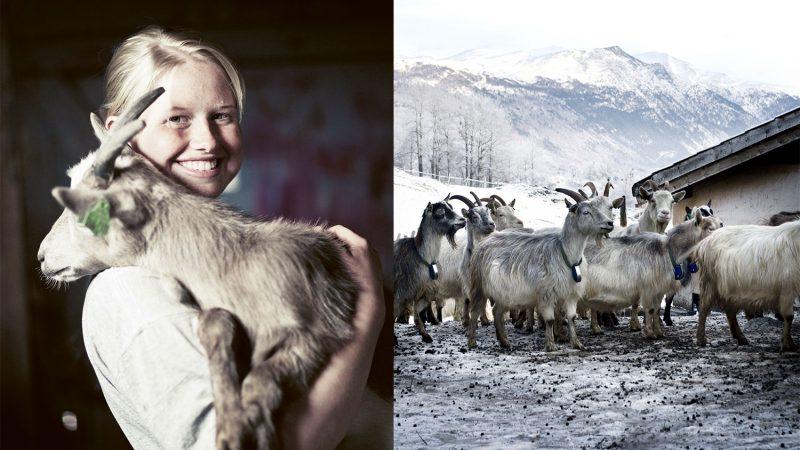 Lager du Norges beste gryterett?